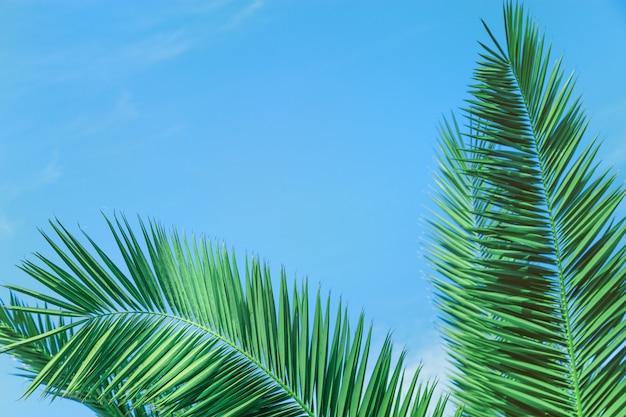 Hojas de palmera bajo cielo azul