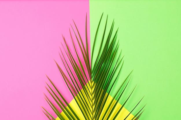 Hojas de palmera tropical verde sobre fondo de color