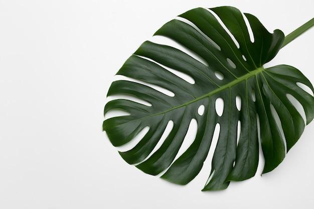 Hojas de palmeras tropicales. colocación plana, vista superior