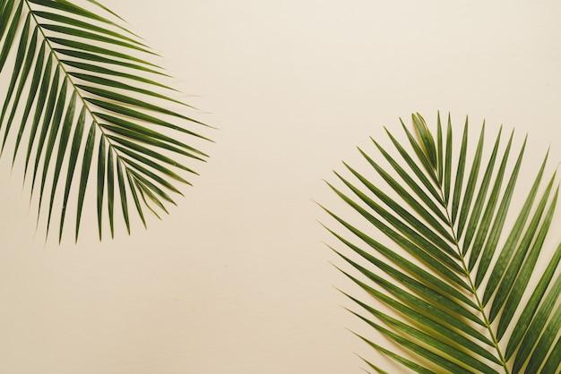Hojas de palmeras tropicales con copyspace