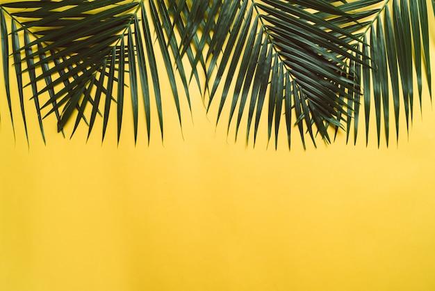 Hojas de palmeras tropicales con espacio de copia.