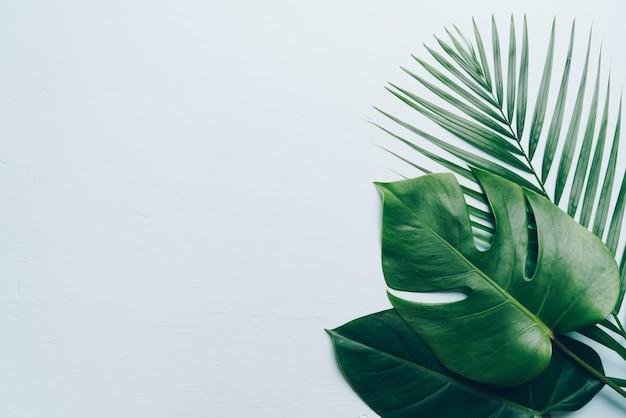 Hojas de palmeras tropicales con espacio de copia