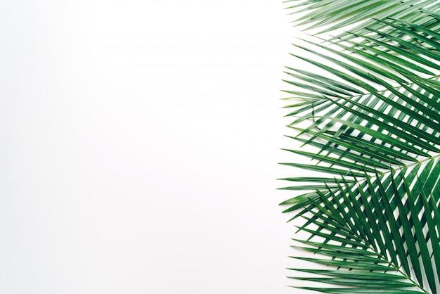 Hojas de palmeras tropicales con fondo blanco copyspace