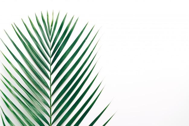 Hojas de palmeras tropicales con fondo copyspace
