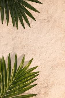Hojas de palmeras tropicales en la playa