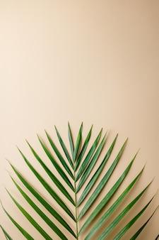 Hojas de palmeras tropicales sobre fondo de color. concepto de verano