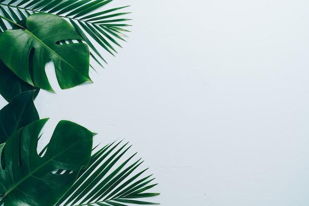 Hojas de palmeras tropicales sobre fondo de color con copyspace