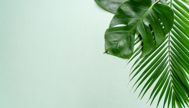 Hojas de palmeras tropicales sobre fondo de color