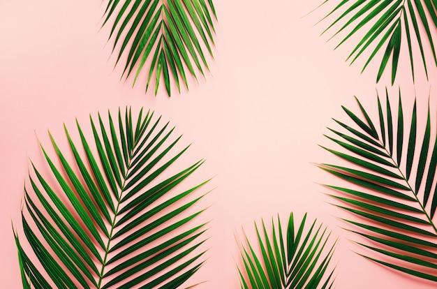 Hojas de palmeras tropicales sobre fondo rosa pastel. concepto de verano mínimo.