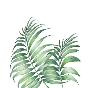Hojas de palmeras tropicales.
