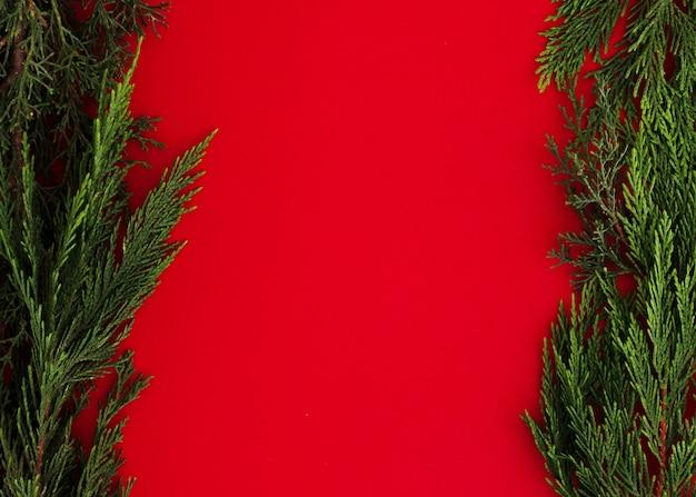 Hojas de pino sobre un fondo rojo con espacio de copia