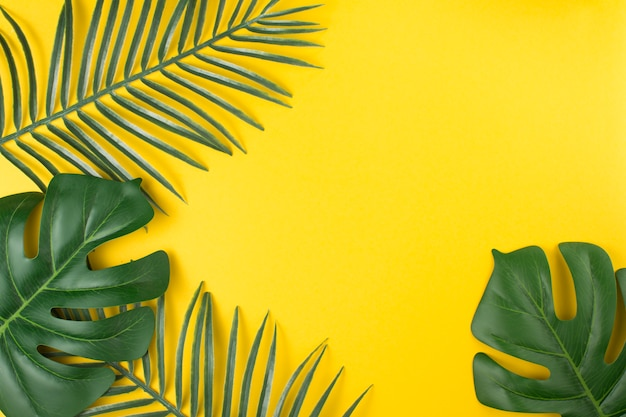 Hojas de plantas tropicales verdes.