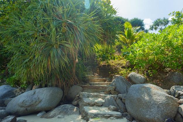 Hojas de las plantas tropicales