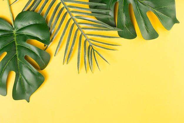 Hojas de plantas verdes