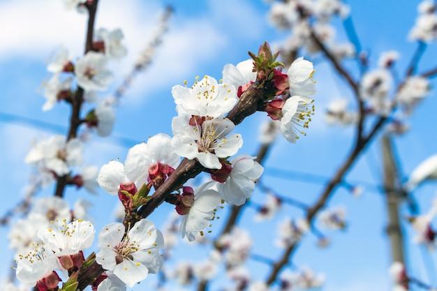 Hojas de primavera y flores florecientes