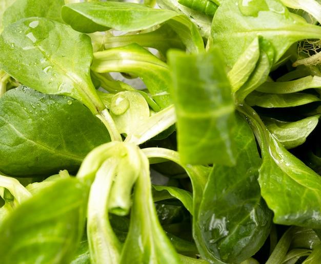 Hojas de primer plano de ensalada fresca