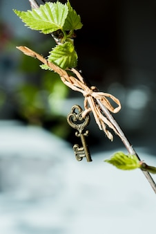 Hojas del riñón de una macro de la primavera del abedul en un fondo negro. vintage llave colgando de una rama
