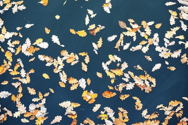 Hojas de roble amarillo caído en la superficie del lago