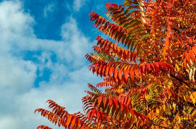 Hojas rojas otoñales, naranjas y amarillas con cielo azul