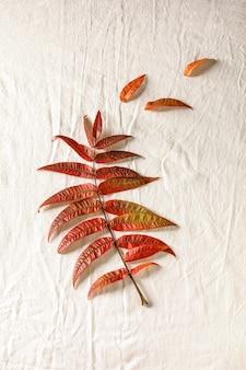 Hojas rojas de otoño
