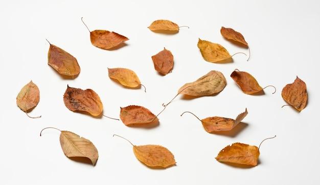 Hojas secas de cerezo dorado, vista superior