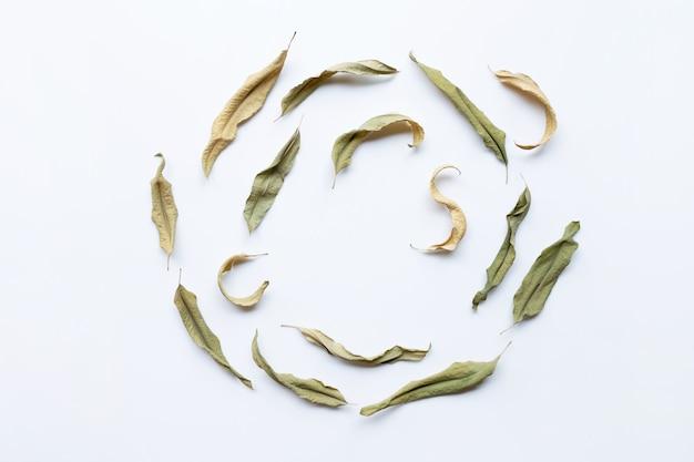 Hojas secas de eucalipto en blanco