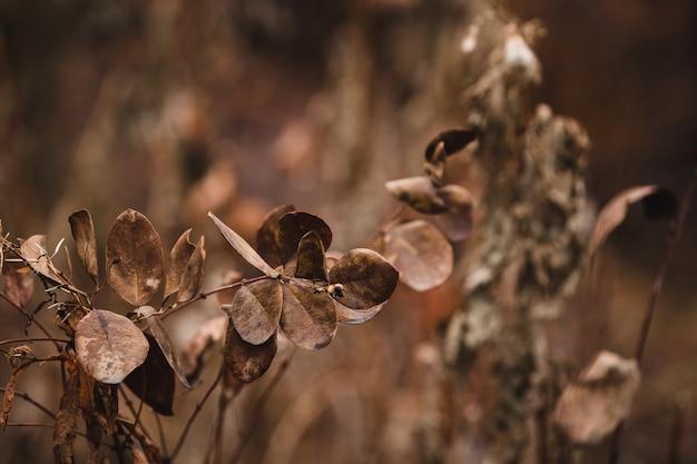 Hojas secas marrones en una rama