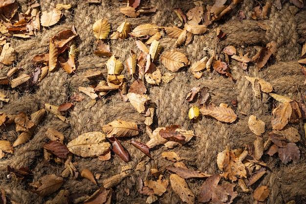 Hojas secas de otoño marrón y amarillo sobre fondo de cuerda de cáñamo