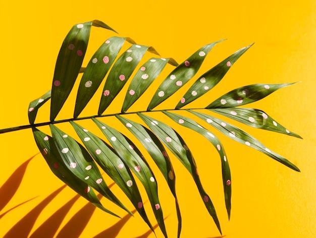 Hojas y sombras de helecho tropical con puntos