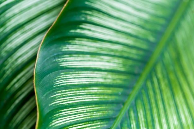 Las hojas son verdes en el espacio natural, copia.