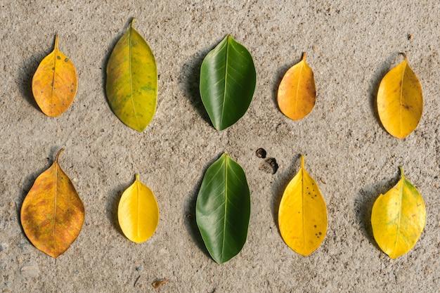 Las hojas en el suelo son muchas formas.