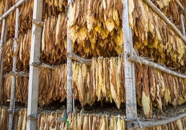 Hojas de tabaco seco en la planta de curado.