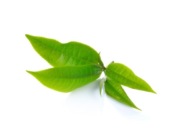 Hojas de té verde frescas aisladas
