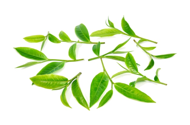 Hojas de té verde sobre fondo blanco.