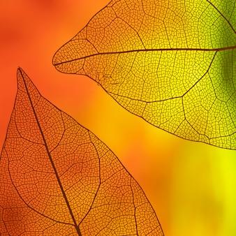 Hojas transparentes con naranja y amarillo.