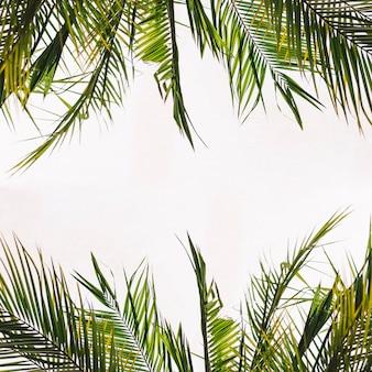 Hojas tropicales con espacio