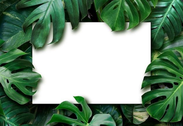 Hojas tropicales y fondo de papel blanco en blanco