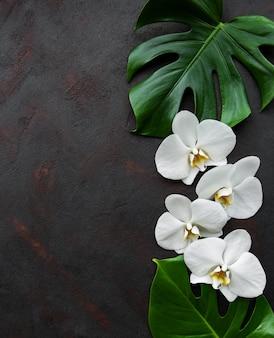 Hojas tropicales de monstera y flores de orquídeas blancas.