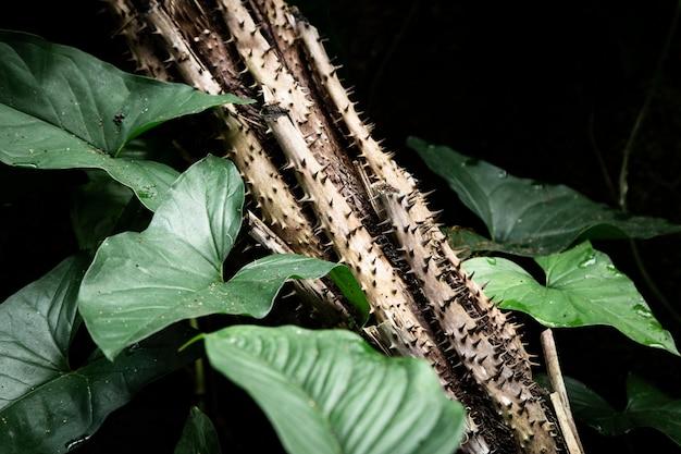 Hojas tropicales y plantas con espinas.
