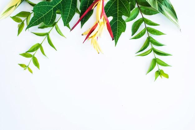 Hojas tropicales plantas de follaje