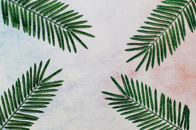 Hojas tropicales sobre un fondo abstracto.