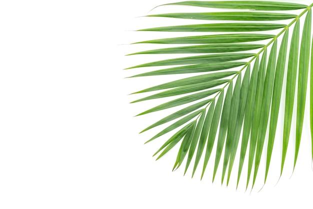 Hojas tropicales sobre fondo blanco