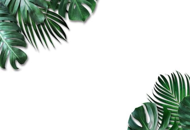 Hojas tropicales sobre fondo blanco.