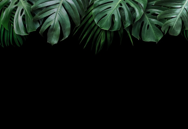 Hojas tropicales sobre fondo negro