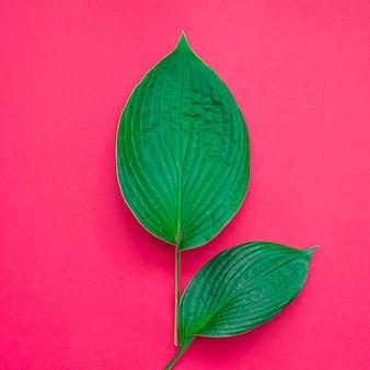 Hojas tropicales sobre fondo rosa. concepto de naturaleza mínima. lay flat