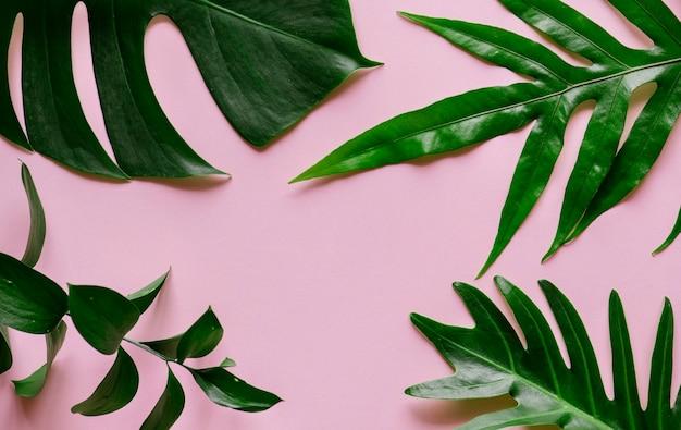 Hojas tropicales sobre fondo rosa