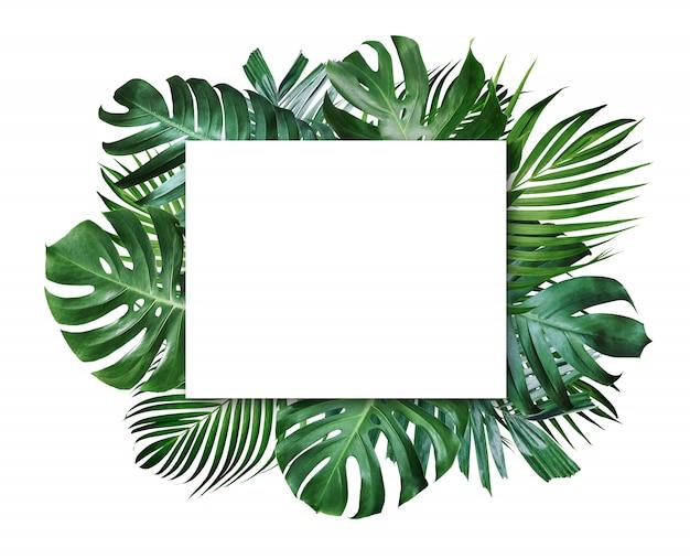Hojas tropicales de verano y marco en blanco con espacio de copia sobre fondo blanco