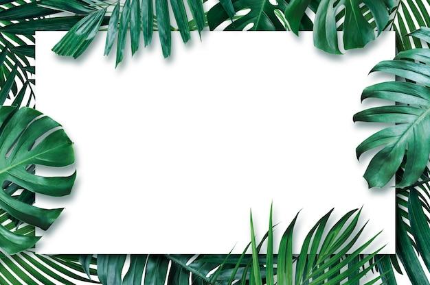 Hojas tropicales de verano con papel en blanco sobre fondo blanco