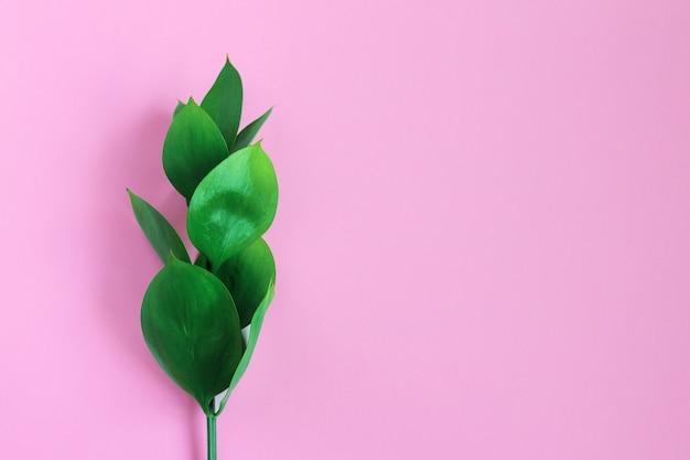 Hojas tropicales verdes en un rosa. moda minimalista con estilo moderno.