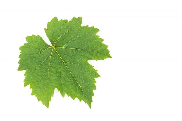 Hojas de uva verde aisladas en blanco